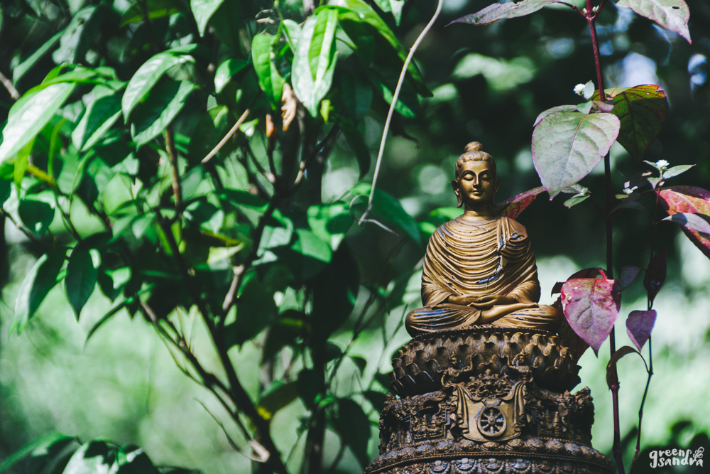 Guía práctica meditación mediante Anapana